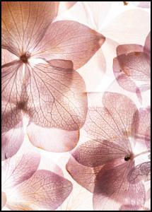 Bildverkstad Orchid Poster