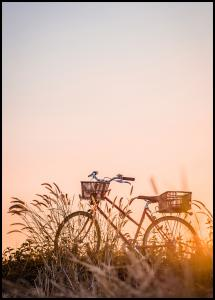 Bildverkstad Bike Ride In The Sunset Poster