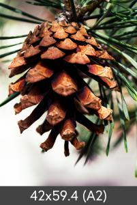 Egen tillverkning - Kundbild Enlargement Fine Art Bambu 290 g