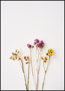 Bildverkstad Dried flowers I Poster