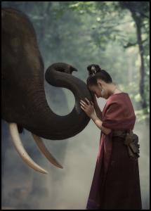 Bildverkstad Respect the elephant Poster