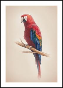Lagervaror egen produktion Tropical Parrot Poster