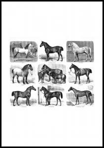 Bildverkstad Horse breeds Poster