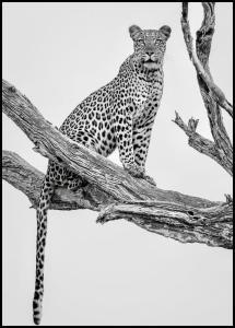 Bildverkstad Leopard Portrait Poster