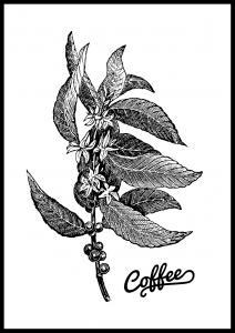 Bildverkstad Coffee Botanical Poster